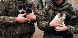 Baczność koty! Żołnierze na poligonie przygarnęli trzy kociaki