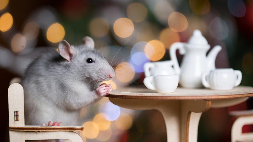 Mit tesznek a világ nagyvárosai a több millió patkány ellen?