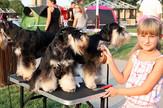 Izložba pasa, Smederevo, Pas