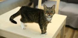 Adoptuj kota z Ochoty