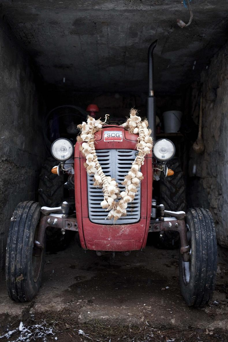 Beli luk protiv vampira na traktoru