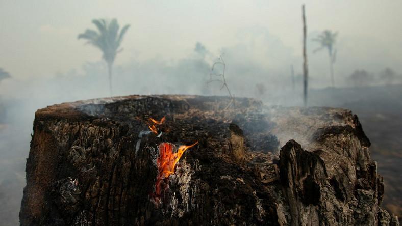 Pożary w Amazonii