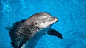 Turyści wyjęli delfina z wody, by zrobić sobie z nim selfie. Zwierzę zdechło