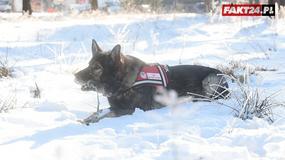 Pies ratujący ludzi w górach