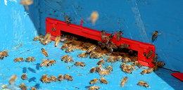 Chleb z glonami - tak wyglądałaby nasza dieta, gdyby nie pszczoły!