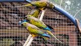 Nowa woliera dla papug w zoo. Kto ją ufundował?