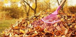 Jesień w ogrodzie - 8 rzeczy, które ułatwią ci pracę!
