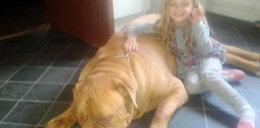 Koszmar! Pies zamordował 4-letnia dziewczynkę!