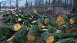 Skandal! Wycięto stuletnie drzewa w gdańskim parku