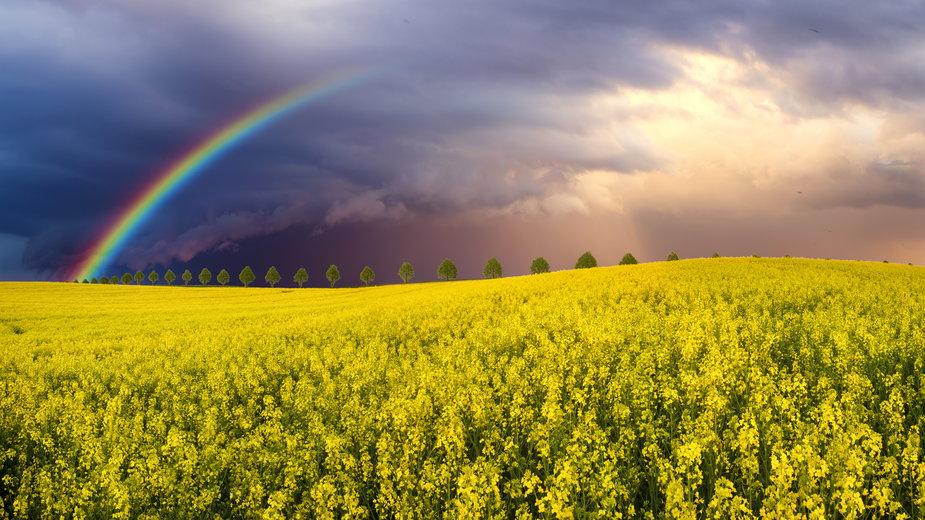 Długoterminowa prognoza pogody. Jaka pogoda w maju 2021? [PROGNOZA]