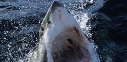 Rekin gigant zabił płetwonurka