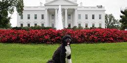 Zobacz zwierzęta z Białego Domu