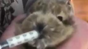 Młody króliczek uratowany przed burzą na lotnisku w Dublinie