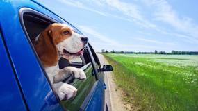 Wakacje z psem. Cztery rzeczy o których należy pamiętać