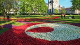 Kwiatowe dywany w centrum miasta. ZOBACZ ZDJĘCIA!