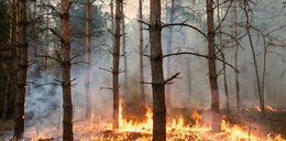 Pożar w Karkonoszach. 22 jednostki strażackie w akcji!