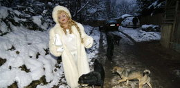 Co stanie się z psami Villas po jej śmierci?