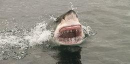 Zaatakował go olbrzymi rekin. Życie uratował mu pies