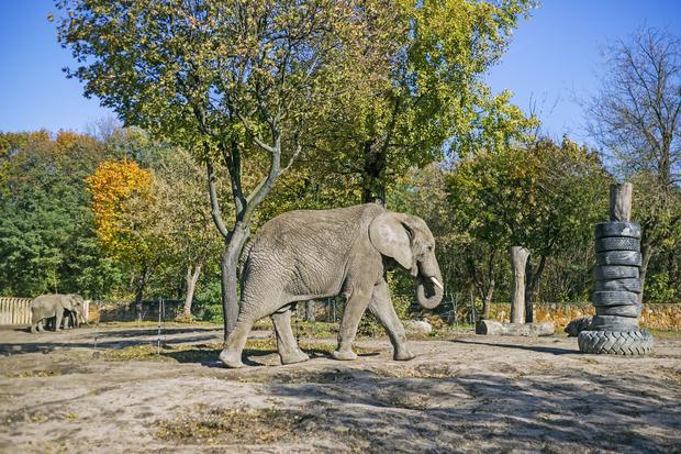 Słoń w warszawskim zoo
