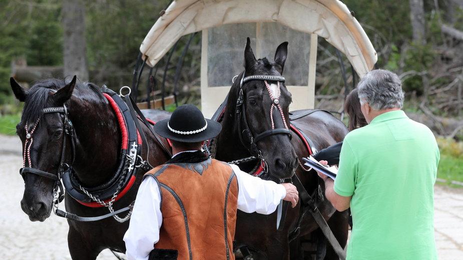 Badanie stanu zdrowia koni