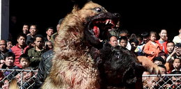 Te psy walczą na śmierć i życie!