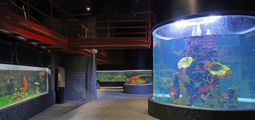 Podwodny tunel, wrak samolotu i drapieżne rekiny. Łódź na swój mały ocean w Orientarium