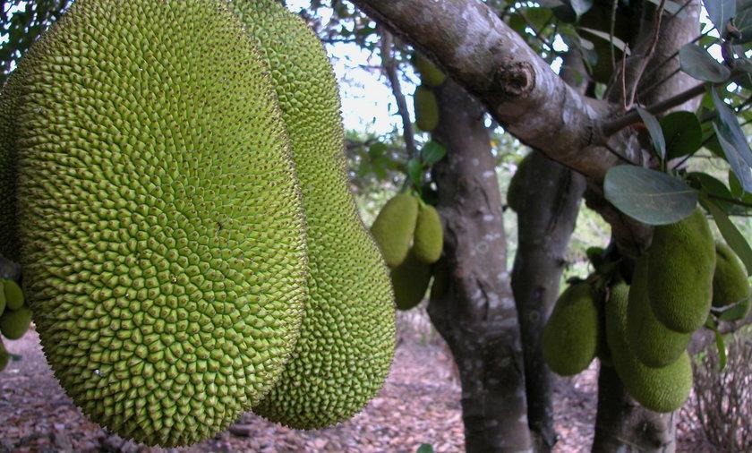 Egzotyczny owoc, który smakuje jak wieprzowina