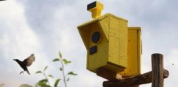 Kierowcy zatrzymują się i łapią za głowy. Co to za fotoradary?!