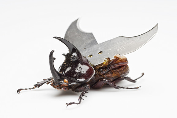 Jan Fabr, Pozorište paukova, detalj, ljubaznošću Angelos studija
