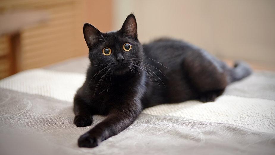 Koty okazują uczucia różnymi gestami - Azaliya (Elya Vatel)/stock.adobe.com