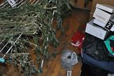Zaplenjena laboratorija i 24 kilograma marihuane u Nisu