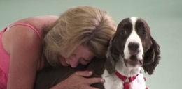 Sparaliżowany pies znów chodzi! Reakcja jego pani? FILM
