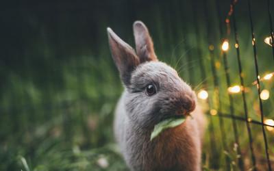 życzenia Wielkanocne śmieszne I Krótkie Wierszyki
