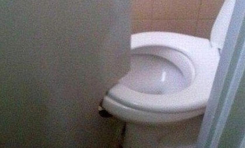 Jak ludzie mają w toaletach