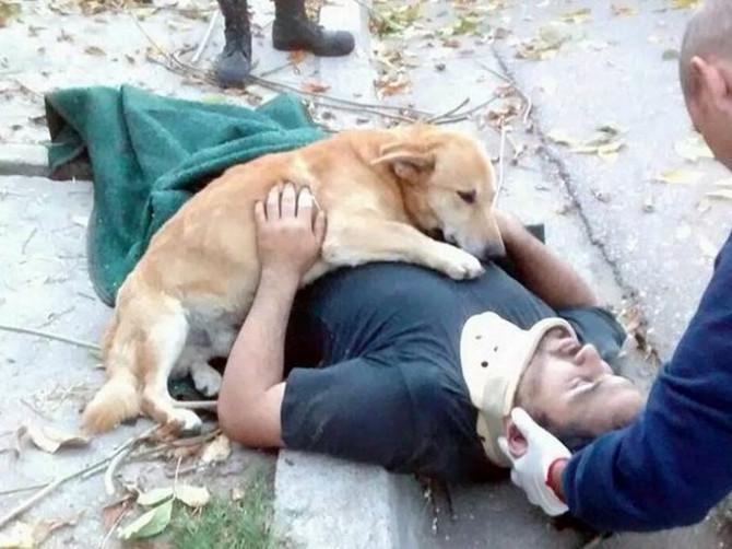 Samo pas zna šta je BEZUSLOVNA LJUBAV: Gledaćete ove slike i RONITI SUZE