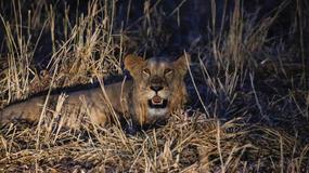 Park Narodowy Dindar w Sudanie coraz większą atrakcją Afryki