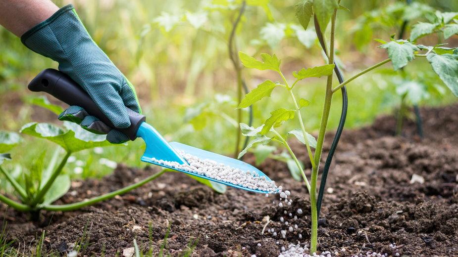 Wiosną warto zasilać rośliny nawozami azotowymi -  encierro/stock.adobe.com