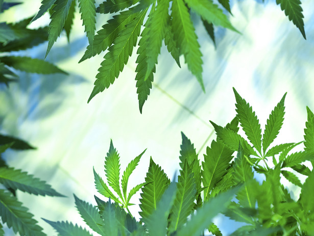 W listopadzie 2017 r. weszła w życie nowelizacja ustawy o przeciwdziałaniu narkomanii, mająca zagwarantować lekarzowi możliwość legalnego i kontrolowanego stosowania produktów z konopi, o ile wiedza medyczna daje możliwość poprawy tym sposobem zdrowia lub jakości życia. Zalegalizowano wówczas surowce w postaci ziela, żywicy i wyciągów z konopi innych niż włókniste, mające służyć przygotowaniu w aptece leków. W praktyce marihuana w postaci suszu pojawiła się w wybranych aptekach rok później, w grudniu 2018.