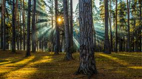 Jak się przygotować na wycieczkę do lasu