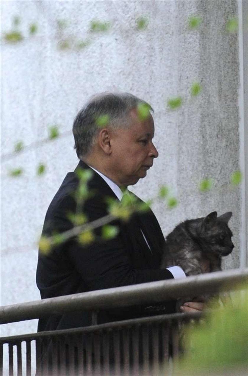 Nowy kot Kaczyńskiego to kotka. Ma na imię...