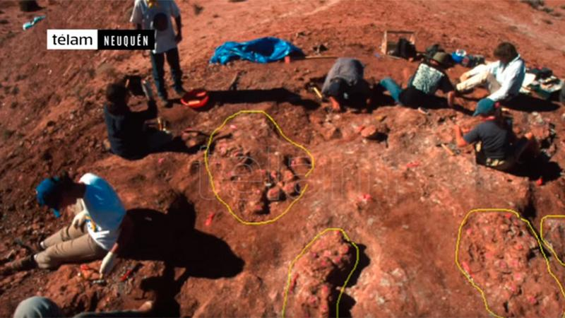 Miejsce, gdzie znaleziono jaja dinozaurów