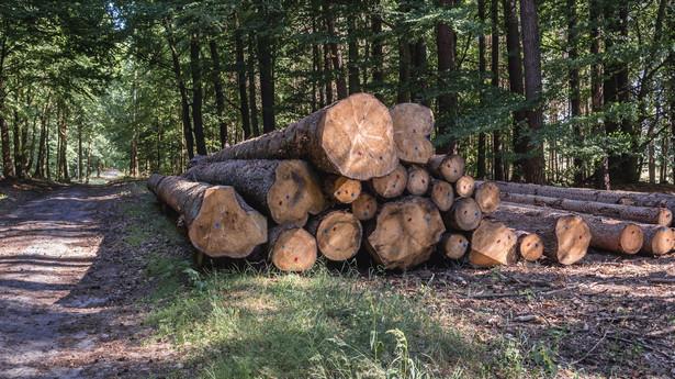 Wycinka drewna w lesie