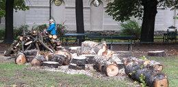 Wycinają drzewa na Plantach