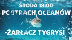 """Tydzień z rekinami: """"Postrach oceanów – żarłacz tygrysi"""" w środę 23 sierpnia w Nat Geo Wild"""