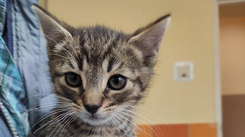 Te urocze kotki szukają domów