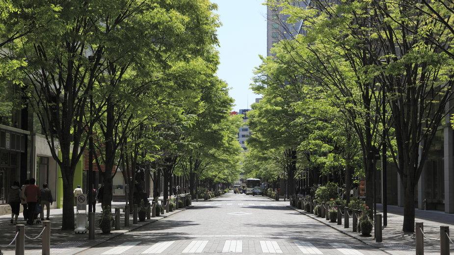 Strategiczne rozmieszczenie drzew na terenach zurbanizowanych może obniżyć temperaturę powietrza o 8 st. C