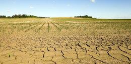 Polscy rolnicy biją na alarm! Mają poważny problem