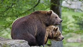 Tatry - trzy małe niedźwiedzie w rejonie Kasprowego Wierchu