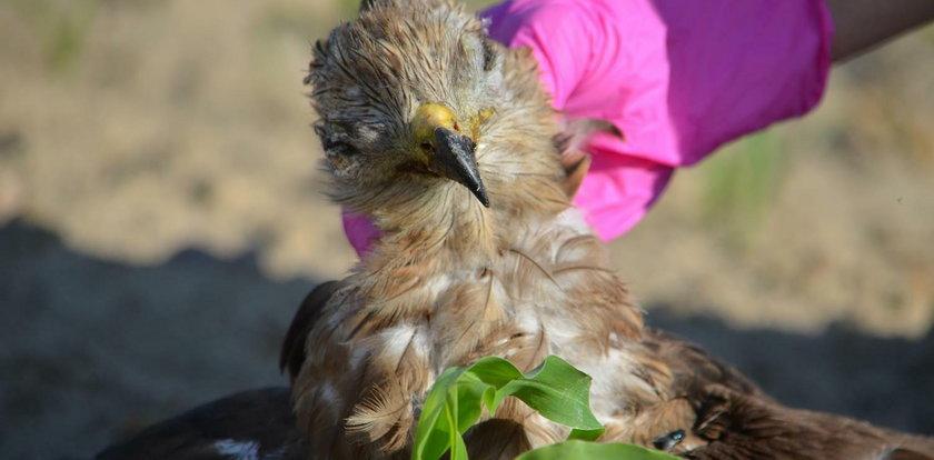 Już 30 ptaków zostało otrutych w Wielowsi. Co się tam dzieje?!