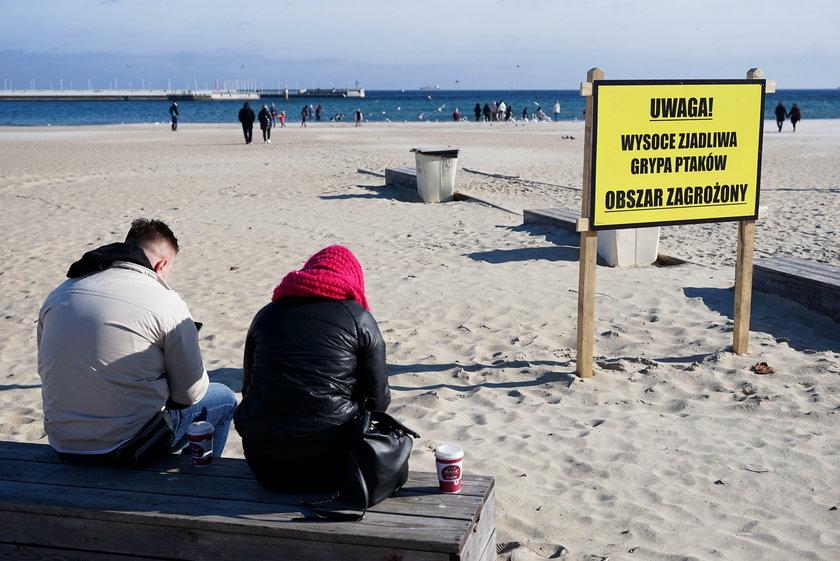 Ptasia grypa w Sopocie.